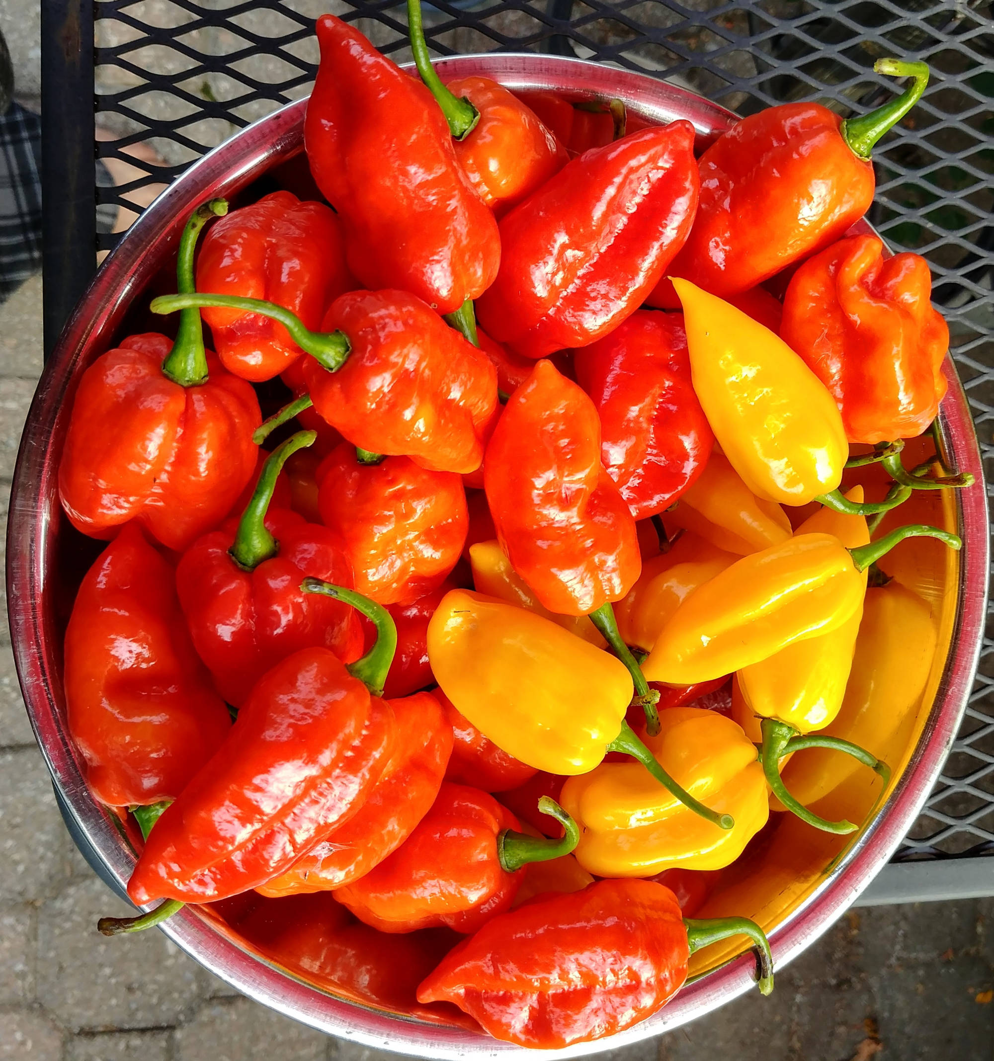 2017 bowl of ghost peppers
